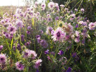 Mit pflanzlichen Heilmitteln gegen Arthrose.