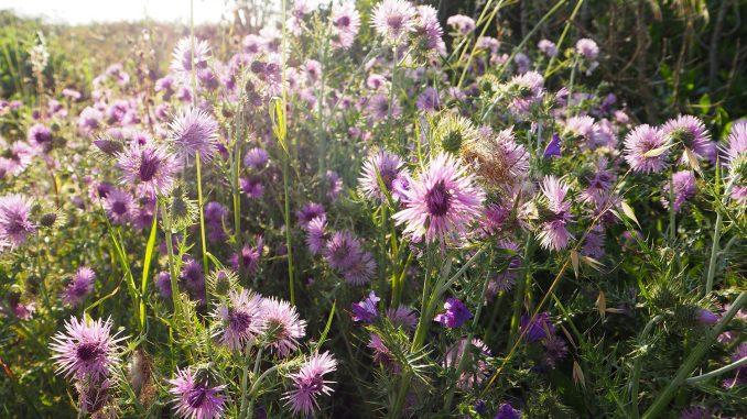 Pflanzliche Heilmittel gegen Arthrose